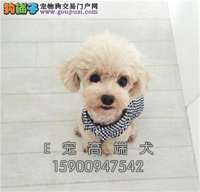 纯种狗狗 正规犬舍繁殖 诚信交易可签协议包纯种包健康