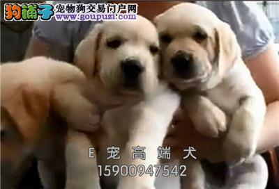诚信为本 纯种 泰迪、幼犬 品种齐全 保纯种健康