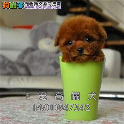 cku纯种 茶杯幼犬 疫苗驱虫已做可上门