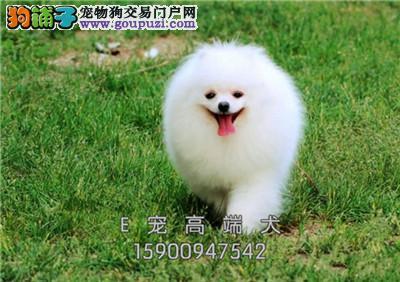 犬舍直售 约克夏犬幼犬 可上门挑选 疫苗驱虫已做