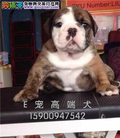 江苏英牛好养赛级狗狗保健康全国发货