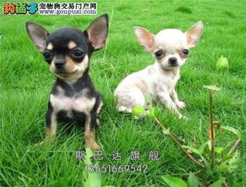上海阿拉斯加熊版狗狗疫苗已做全国发货