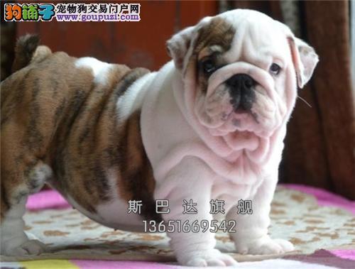 上海英牛乖巧狗狗疫苗已做全国发货