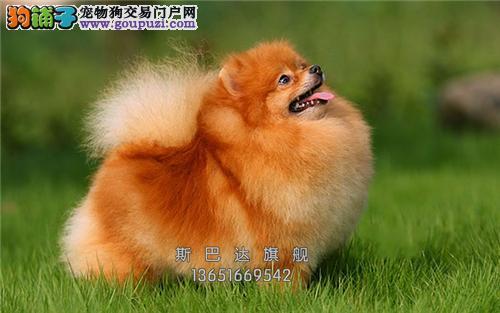 上海博美顶级球形送用品全国发货