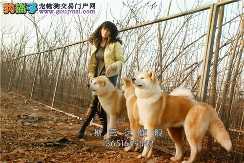 上海出售法牛骨量足小保健康全国发货
