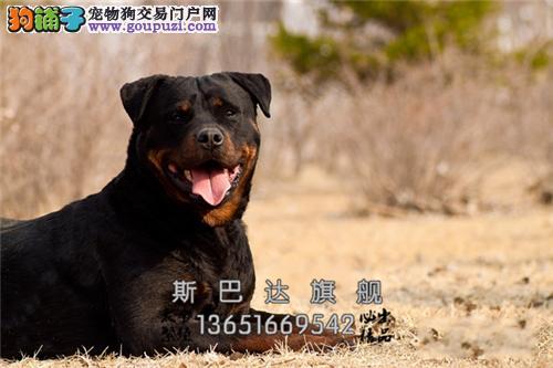 养殖场出售 秋田犬 上门挑选 当日下单半价!