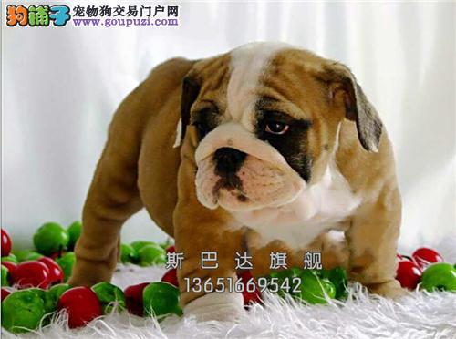 上海英牛可爱骨量足可视频挑选全国发货