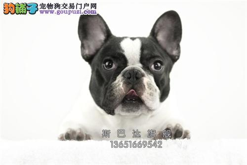 上海家养法牛自家养上门打折全国发货
