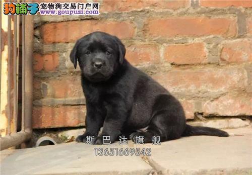 犬舍出售<柴犬> 上门挑选 当日下单半价!