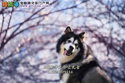 陕西阿拉斯加熊版狗狗疫苗已做全国发货