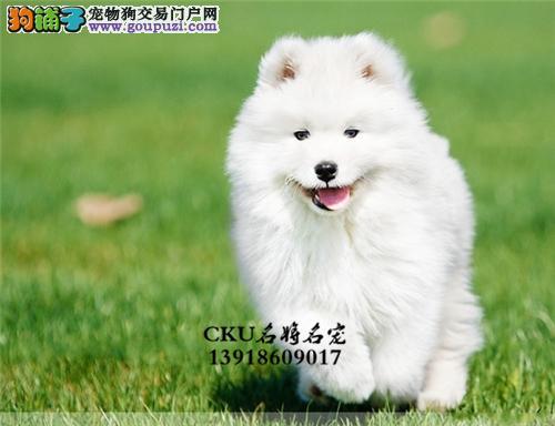 本犬舍出售,多品种,纯种,健康宠物狗,90天包退换