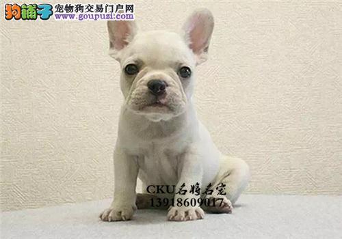 四川法牛聪明出售小幼犬疫苗已做全国发货