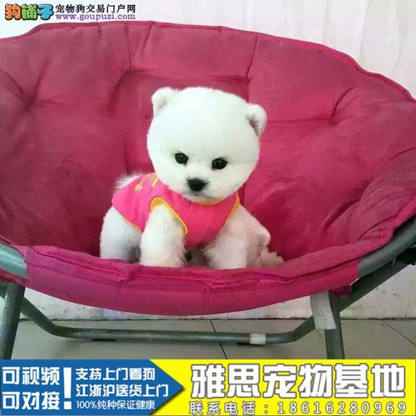 犬舍专业繁殖出售聪明博美等大众精品幼犬欢迎选购