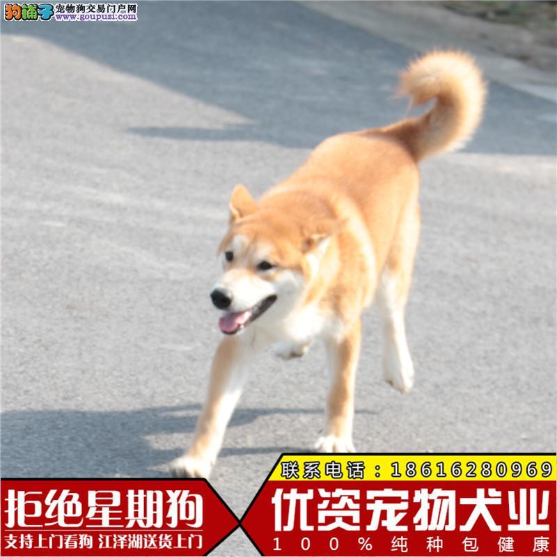大养殖场一各类世界名犬出售一包纯种一售后完美