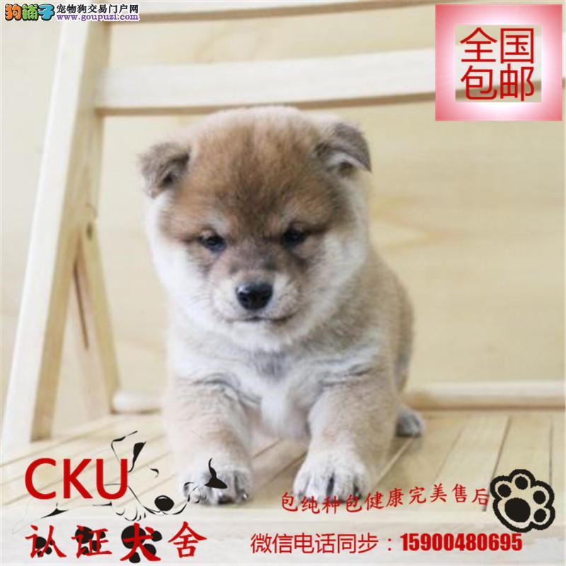 纯日系血统柴犬 种犬全部国外引进 幼犬多只可挑选