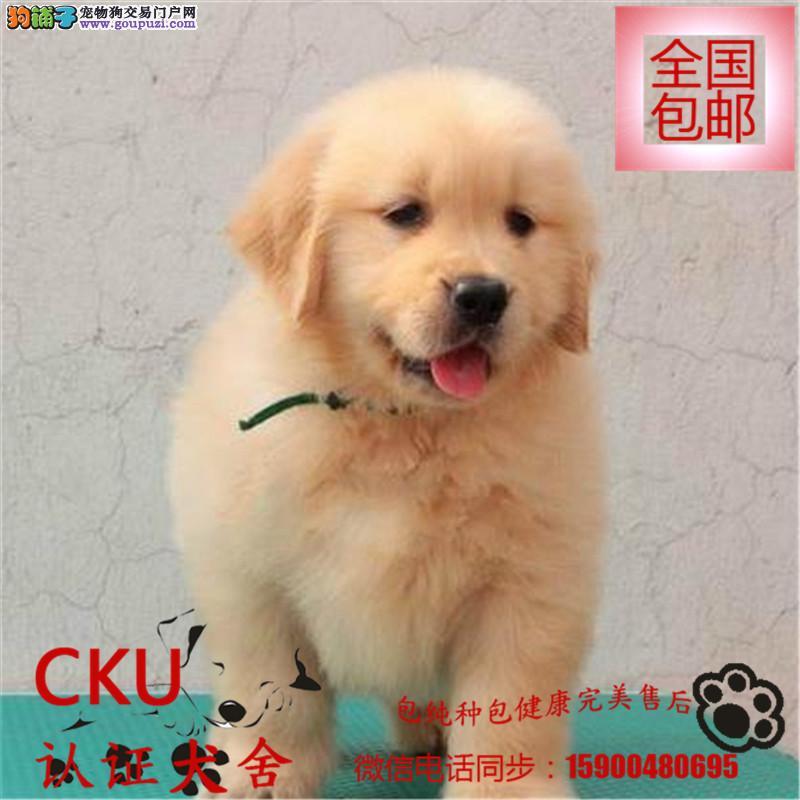 诚信交易、纯种金毛犬、健康终身保障、签协议送狗用品