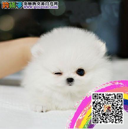 健康精品诚信交易专业繁殖出售各类小型犬 给你生活