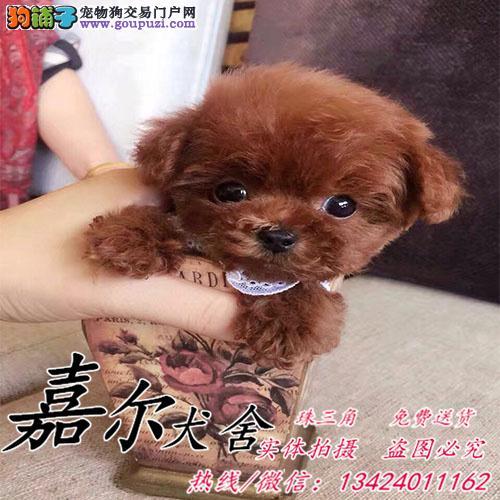 深圳哪里有卖宠物狗?买狗首选嘉尔犬舍 可送货