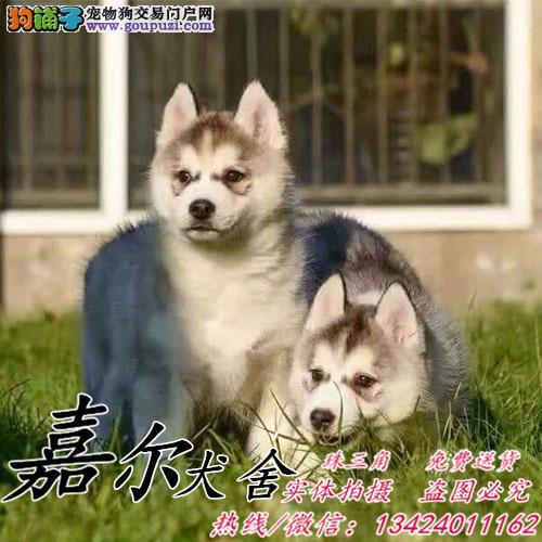 深圳有狗场吗?深圳买狗怎么买?嘉尔狗场