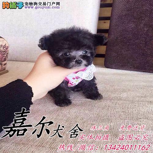 深圳贵宾犬哪里有卖,深圳泰迪熊哪里有卖