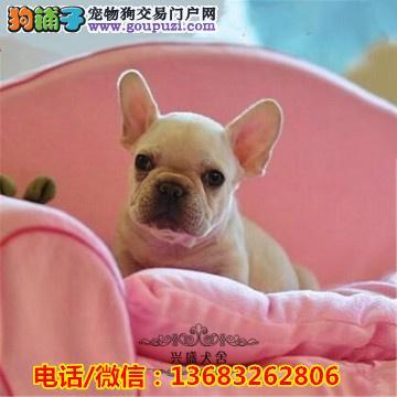 台湾双血统法国斗牛幼犬出售。自家繁殖,保证健康