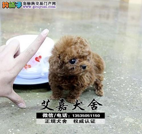 广州附近哪有比较出名的养狗场广州买狗到艾嘉名犬