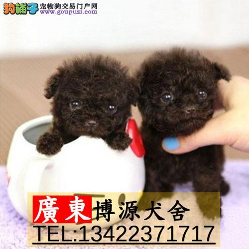 广州哪有卖贵宾犬广州贵宾犬价格是多少呢