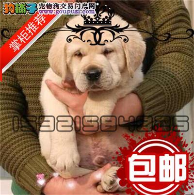 精品拉布拉多幼犬一证书齐全一血统纯正一送用品签协议