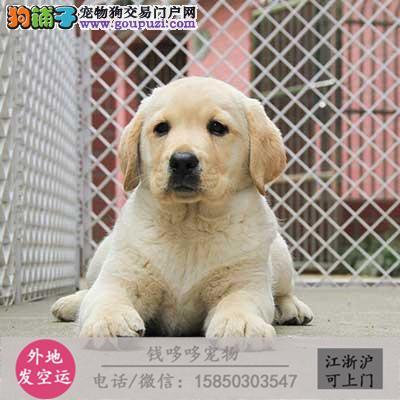 出售精品斑点狗包纯种健康
