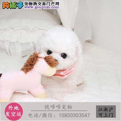 纯种苏牧幼犬常年销售 高品质公母多只可挑