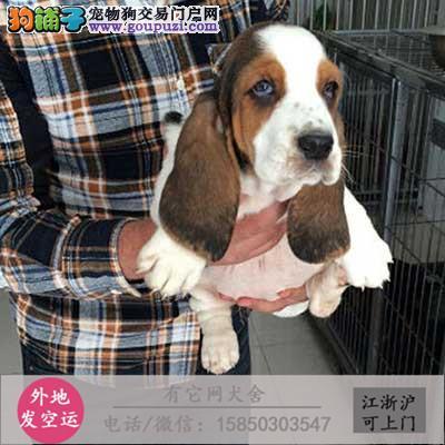 犬舍直销一马尔济斯犬一签协议一包养活一三个月可退换