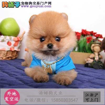 高品质的斑点幼犬出售了 疫苗做完 质量三包