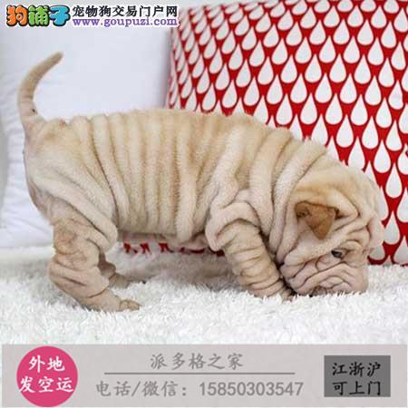 cku认证犬舍出售极品 杜高签协议保健康
