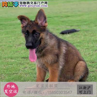 养殖场直销德国黑背犬等幼犬 品种齐全