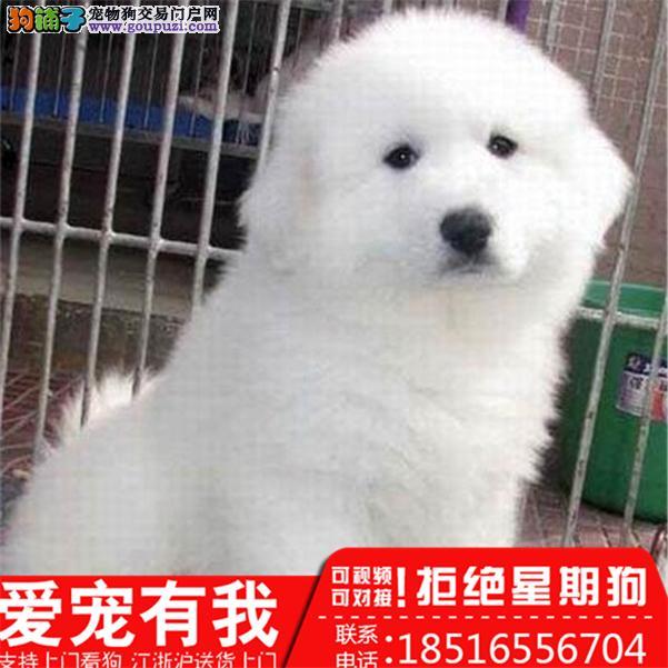 正规犬舍 繁殖各类名犬 大白熊 包养活 买狗送用品