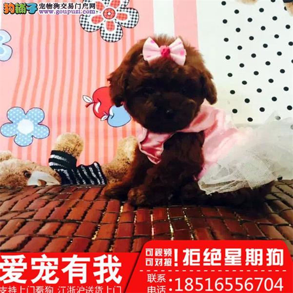 上海本地犬场一茶杯,玩具各色泰迪犬一包养活一签协议