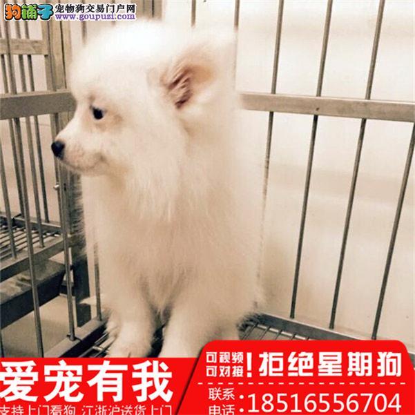 高品质 银狐幼犬 、日本仲犬、包健康纯种