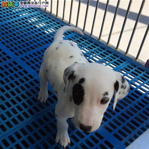 cku认证犬舍十二年繁育精品养宠从遇见百业开始