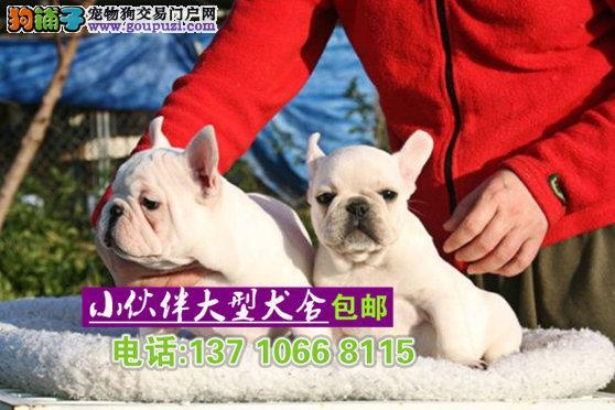 深圳哪里有卖奶油色法牛 深圳奶油色法牛多少钱一只