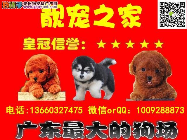 3个月阿拉斯加 cku认证犬舍可微信视频看狗 送30斤狗粮