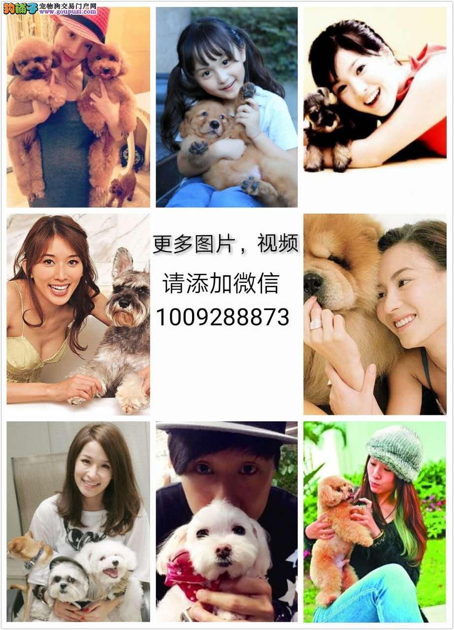 狗场直销 多个品种 可视频 可送货上门 货到付款¥