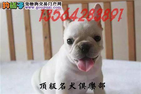 CKU认证犬舍直销法国斗牛犬頂级品质签协议包售后