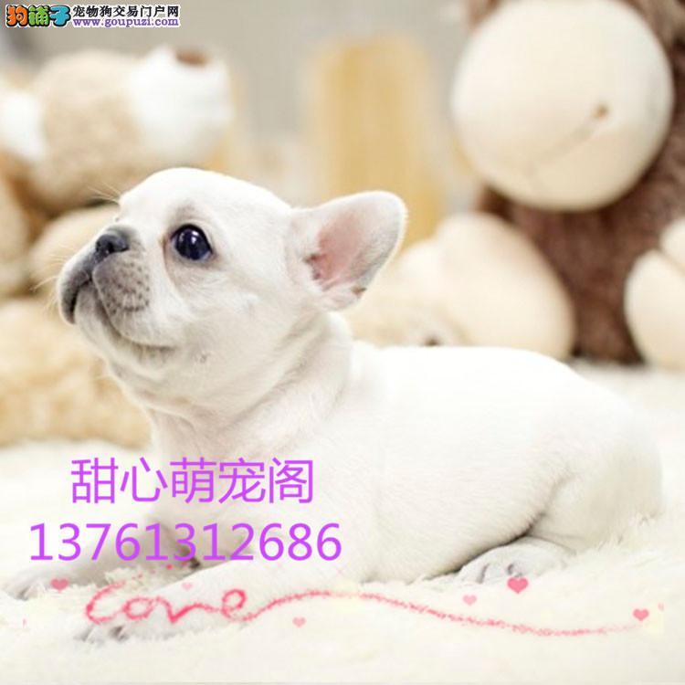 出售带血统高加索 高加索精品幼犬 绝对的品质优秀