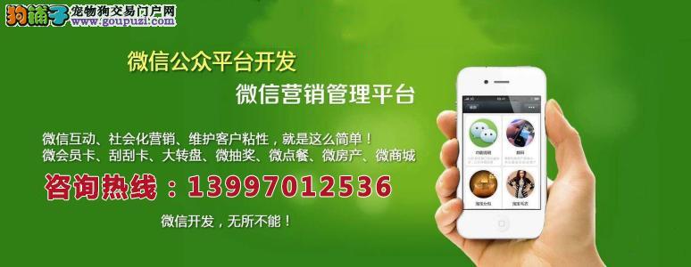 青海旭云网络科技有限公司_微信公众平台搭建