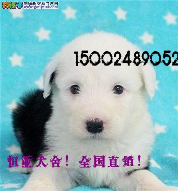 中国最大的中亚牧羊犬繁育基地出售纯种中亚牧羊犬