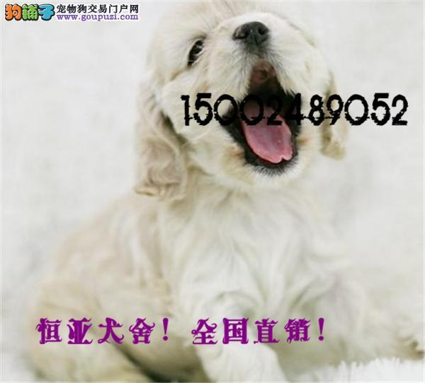 长期繁殖顶级纯血统可卡 各类纯种名犬 包养活签协议