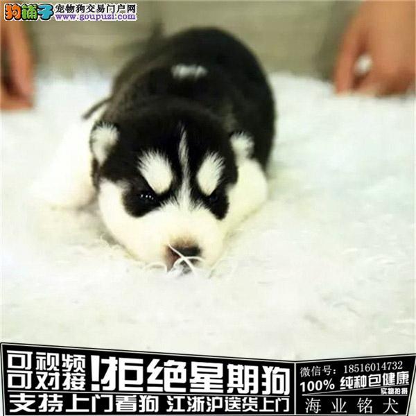 cku认证犬舍出售极品哈士奇 签协议保健康