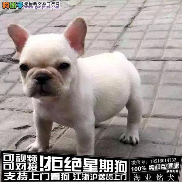 cku认证犬舍出售极品法国斗牛犬 签协议保健康