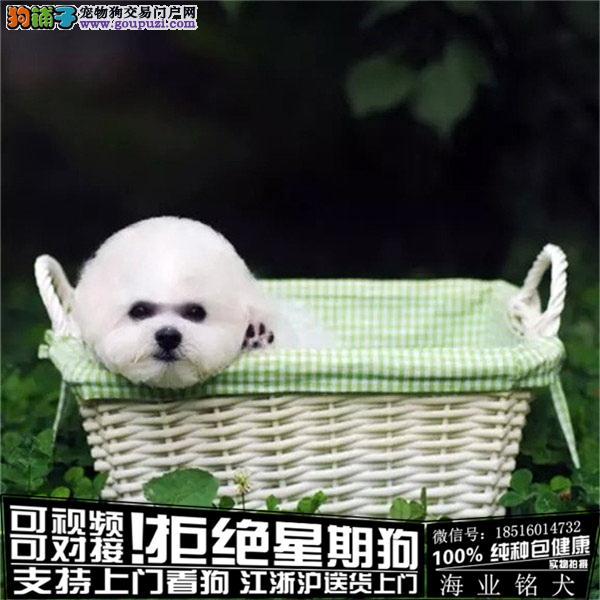 cku认证犬舍出售极品 比熊签协议保健康