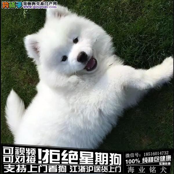 cku认证犬舍出售极品 摩萨耶签协议保健康